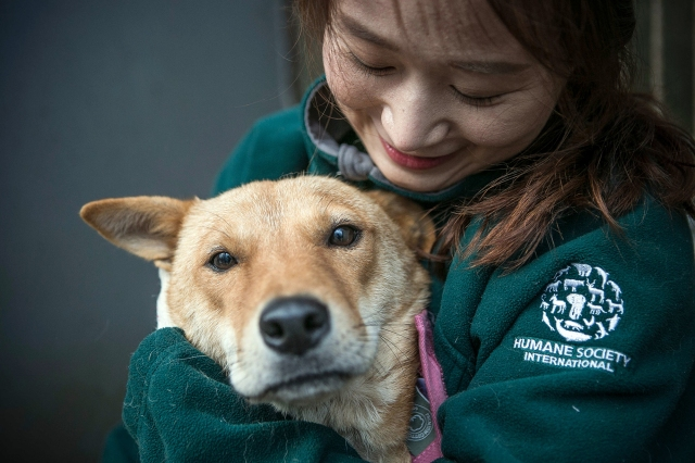 South Korea Dog Meat Farm (Farm 10)