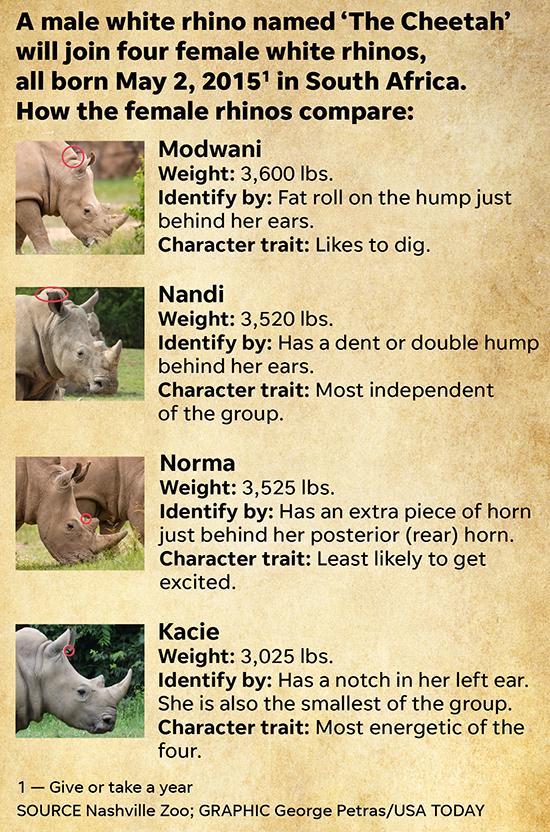 Rhino.Females.04